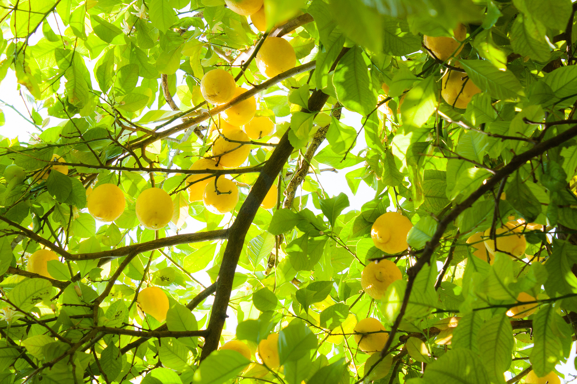 Canteiros Aromaterapia